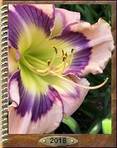 Daylily names at bottom page